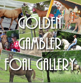 Golden Gambler Foal Gallery